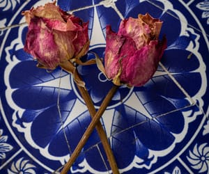aesthetics, rose, and blue image