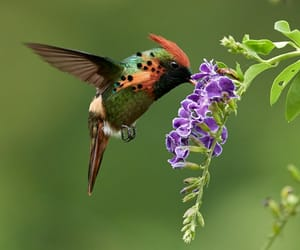 birds, photography, and colorful image