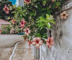 autoral, blossom, and city image