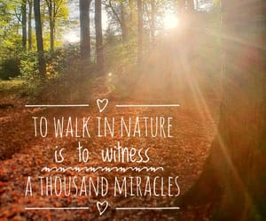 forest, miracle, and nature image