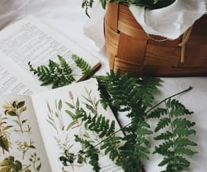 plants, book, and vintage image