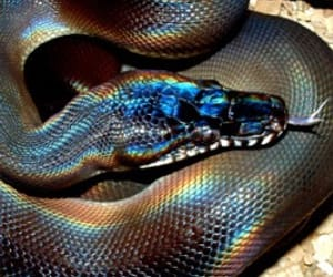 beautiful, snakes, and reptile image