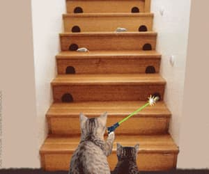 art, lazer, and cat image