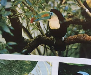 aesthetic, photography, and toucan image