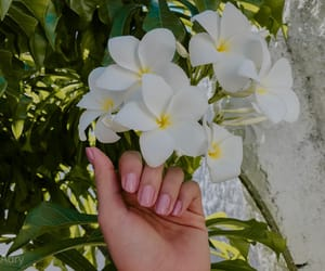 autoral, beach, and flowers image