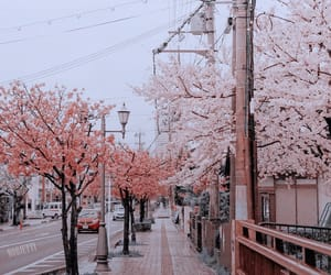 pink, sakura, and theme image