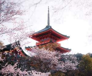 japan, photography, and japón image