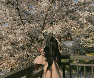 asian, beautiful, and cherry blossom image