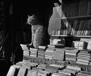 cat and books image