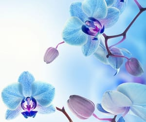 blossom, flower, and orchid image
