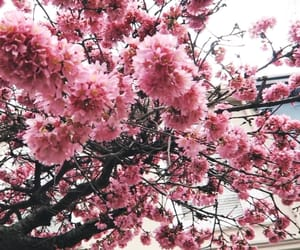 bloom, blossom, and cherry image