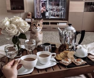 coffee, food, and animal image