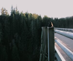 bridge, camping, and forest image