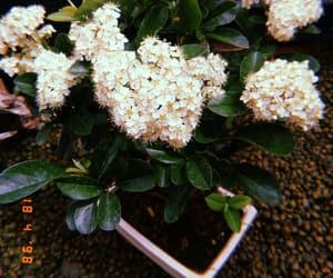 bonsai, flower, and garden image