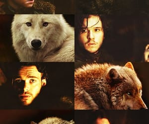 got, games of thrones, and house stark image