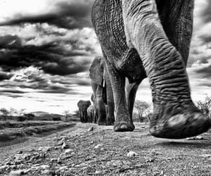 Animales and elefantes image