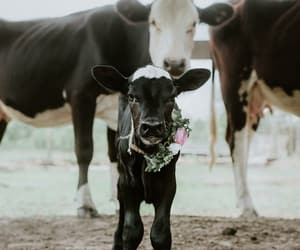 animals, farm, and country living image