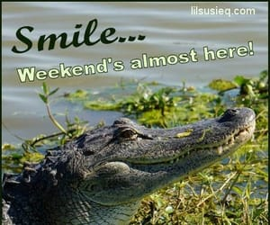 florida, funny, and quotes image