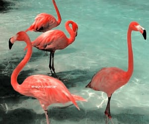 flamingo, pink, and summer image