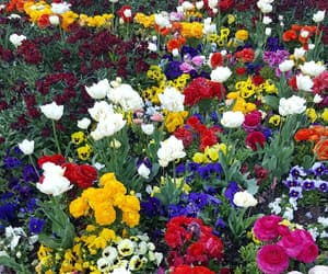blumen, flowers, and spring image