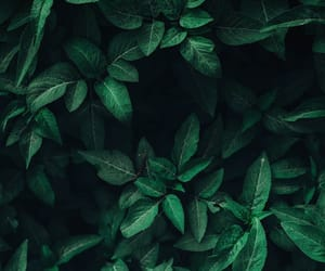wallpaper, green, and nature image