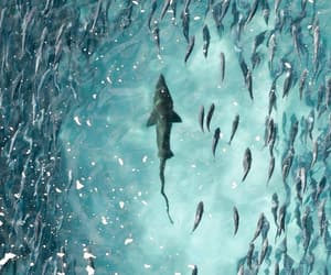 Animales, mar, and naturaleza image