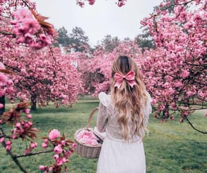 aesthetic, blossom, and flowers image