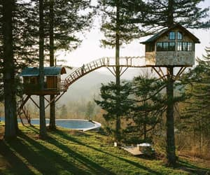 tree, forest, and cabin image