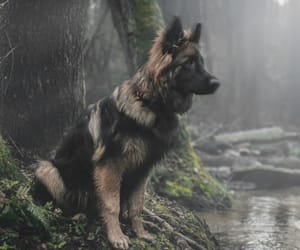 animals, pets, and dogs image