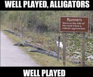 alligators, florida, and funny image