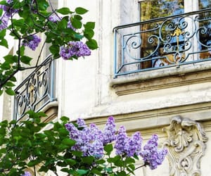 architecture, beautiful, and florals image