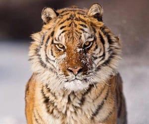 Animales, belleza, and mirada image