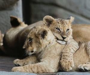 adorable, кошки, and мило image