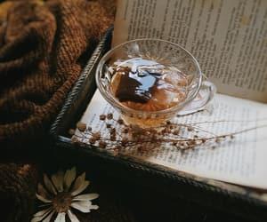 autumn, books, and daisy image