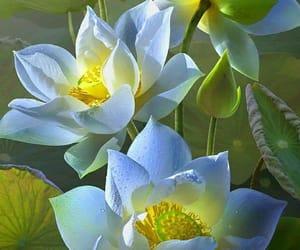 flores, primavera, and spring image