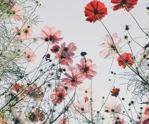 flowers, nature, and positive image