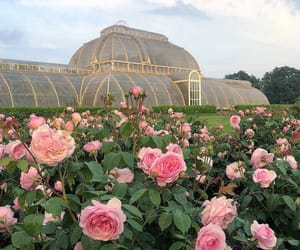 rose, aesthetic, and nature image