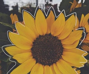 flower, yellow, and photography image