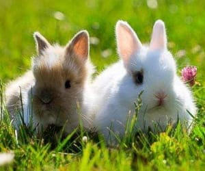 spring and bunny image
