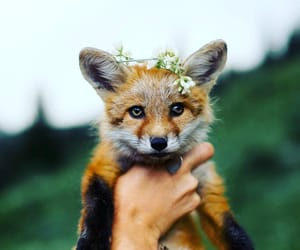 animals, flowers, and fox image