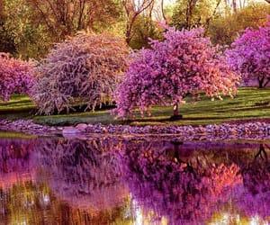 cherry blossom, primavera, and flowers image