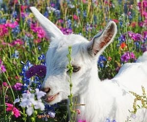 flowers, cute, and lamb image