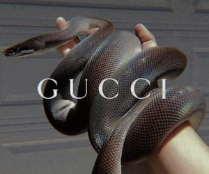 gucci, snake, and aesthetic image