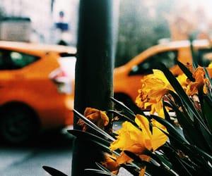 city, flower, and manhattan image