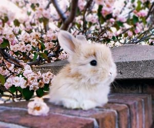 bunny, animals, and cute image