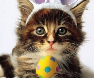 animal, cat, and easter image