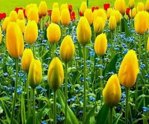 beautiful, tulips, and colors image
