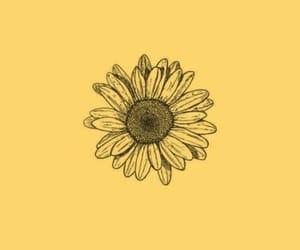 minimalism, sunflower, and yellow image