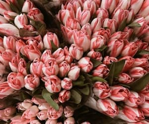 tulips, flowers, and bouquet image