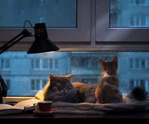 cat, cats, and relax image